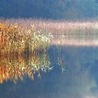 Lake near Berlin by Imi Koetz