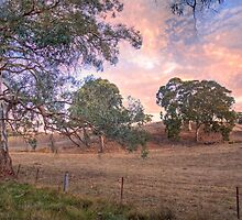 Farmland, Dawsley, Adelaide Hills by Mark Richards