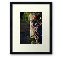 In the Vineyard Framed Print
