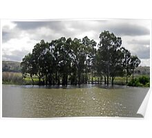 Trees on the Murray River Poster