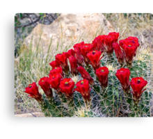Red Claret Cup Cactus Flowers in Captiol Reef National Park Canvas Print