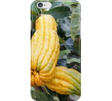 lemon in spring iPhone Case/Skin