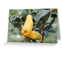 lemon in spring Greeting Card