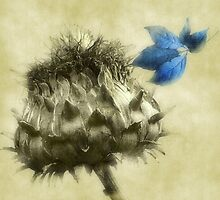 A Blue Melody by Christine Lake