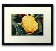 lemon in spring Framed Print