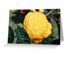 lemon in spring Greeting Card