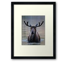Friendly Moose Framed Print