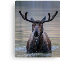 Friendly Moose Canvas Print