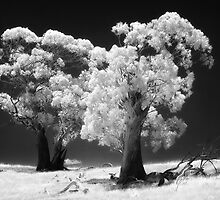 Trees in IR by Hans Kawitzki