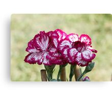 colored flowers in spring Canvas Print