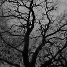 Ghost Tree by himmstudios