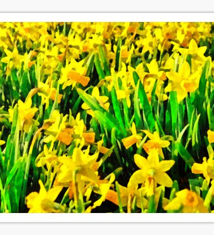 Field Of Daffodils Sticker