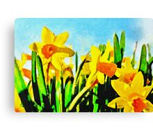 Daffodils By Morning Light Canvas Print