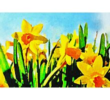 Daffodils By Morning Light Photographic Print