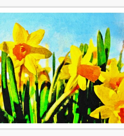 Daffodils By Morning Light Sticker
