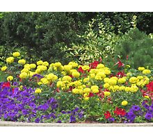 Colorful Flowers - Streets of Boston Photographic Print