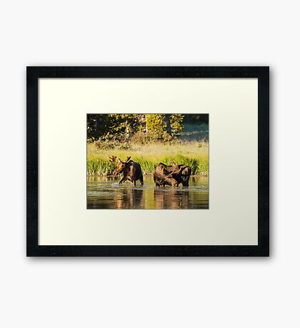 Two Moose Framed Print