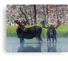 Moose in Dawn Fog Canvas Print