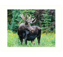 Moose in Wildflowers Art Print