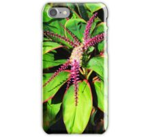 Tropical plant in bloom iPhone Case/Skin
