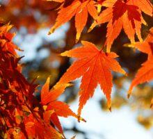 Autumn Colours 6 Sticker