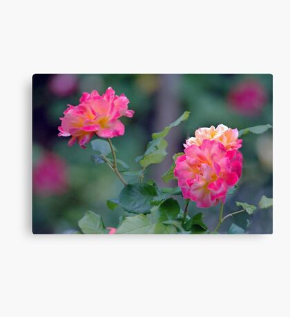 Cottage Garden Roses Canvas Print