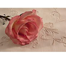 The Beauty Of Just One Rose  Photographic Print