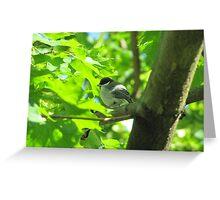 Cute baby bird on branch Greeting Card