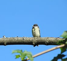Angry baby bird on branch by PVagberg
