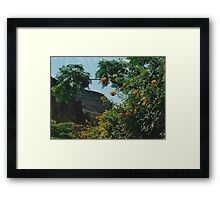 Tropical Orange Flowers Framed Print