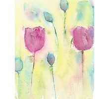 Poppies and Pods Photographic Print