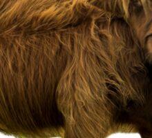 Shaggy Highland Cow III Sticker