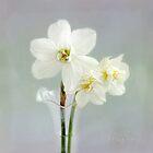 The Poet's Daffodils by LouiseK