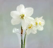 The Poet's Daffodils by LouiseK
