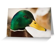 Mr Duck Greeting Card