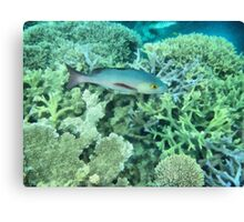 Fish roaming the reef Canvas Print