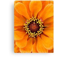 Bright Orange Petals Canvas Print
