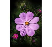 bright pink flowers Photographic Print