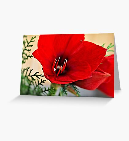 Christmas Flower Greeting Card