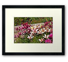 A Lily Variety - Digital Oil Art Work Framed Print