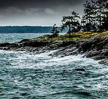 on the shores of salt spring island by maria miller
