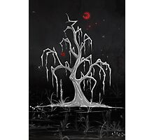 Red Moon White Willow Photographic Print