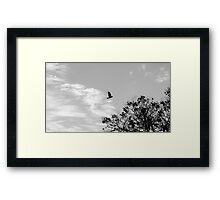 Free like the wind  Framed Print