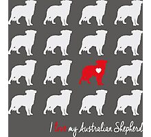 I love my Australian Shepherd - breed dog Photographic Print