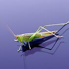 GRASSHOPPER by TomBaumker