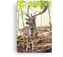 King of the Forest 4 Canvas Print