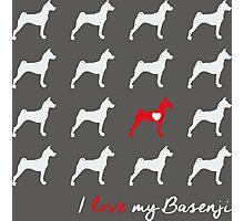 I love my Basenji - breed dog Photographic Print