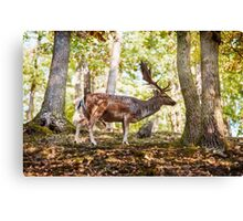 King of the Forest 6 Canvas Print
