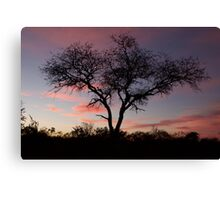 Sunrise at Kruger National Park with Trees Canvas Print