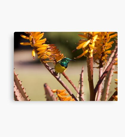 Green and Yellow Bird with Orange Flowers Canvas Print
